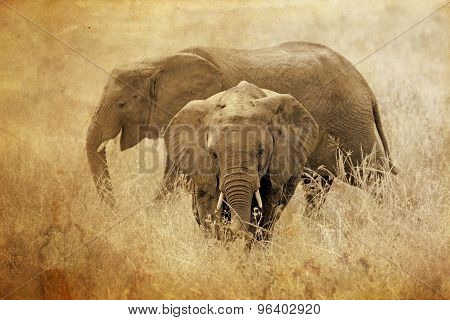 Young African Elephants In Vintage Sepia Tone