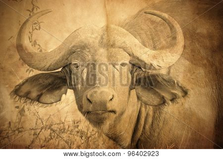 Portrait Of African Buffalo In Vintage Sepia Tone