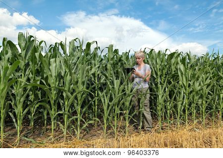 Agriculture, Farmer Or Agronomist In Corn Field