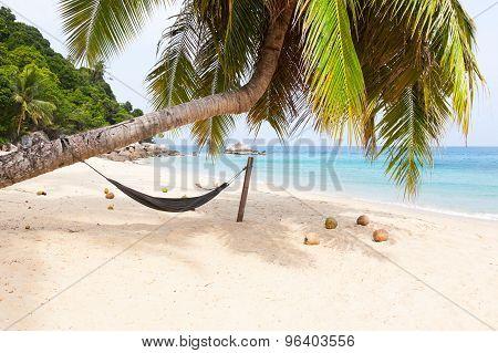 Hammock palm tree tropical beach island