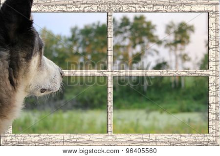 Dog Looking Through A Window