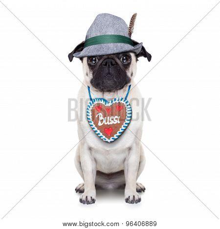 Bavarian German Pug Dog