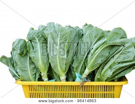 Green Lettuce In Yellow Basket Isolated