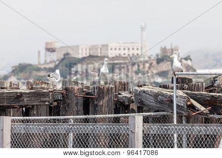 Seaview Of Alcatraz