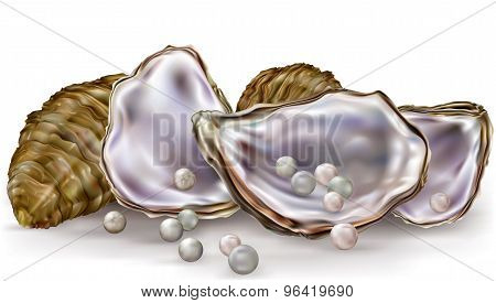 Pearls In The Oysters On A White