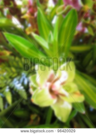 Blurry Image Of Orchid In The Garden.