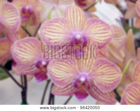 Blurry Image Of Pink Orchid.