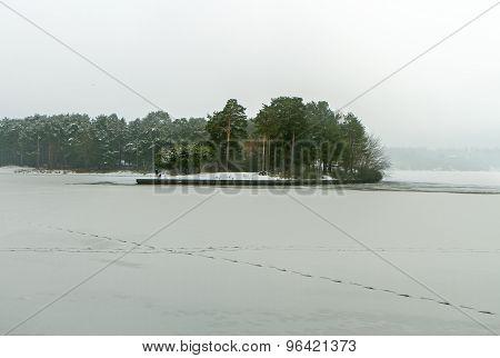 Forest Near Lagoon