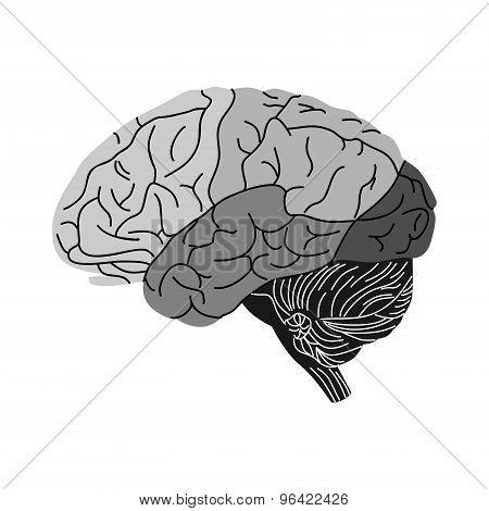 brain black