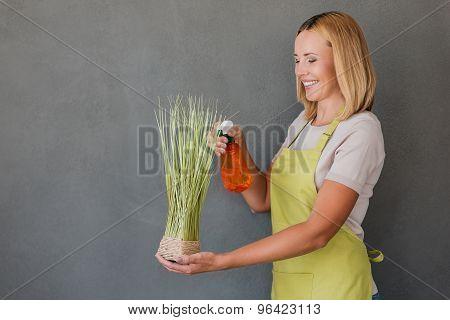 Refreshing Plant.