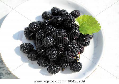 mulberry raspberry blueberry