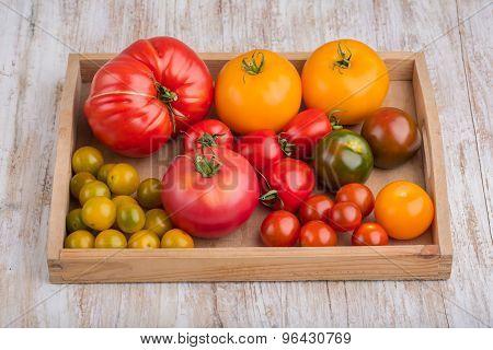 Assorted Varieties Of Tomato