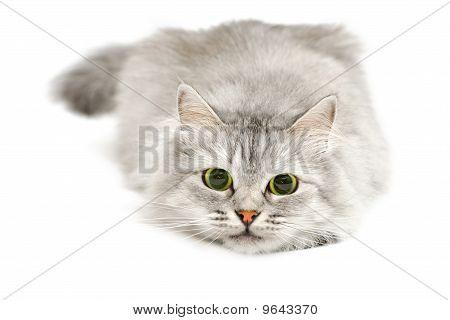 Cute Cat Before Jump
