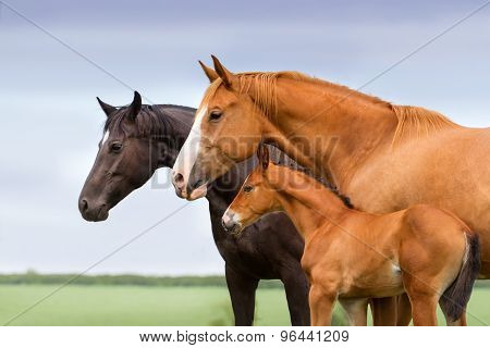 Mares with colt