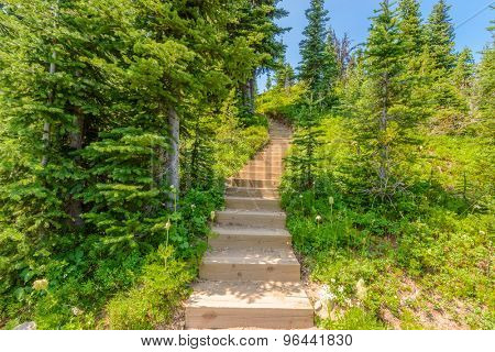 A stairs at trail in Blackwall Peak trail at Manning Park, British Columbia, Canada.