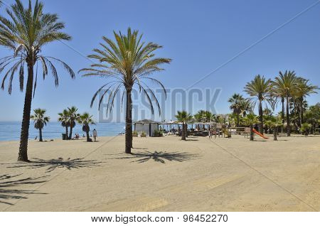 Palm Trees In The Beach