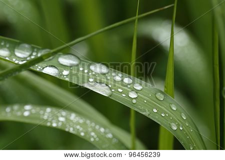 Water droplets on Grass blade - macro.