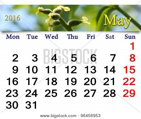 Calendar For May 2016 With Image Of Blooming Walnut