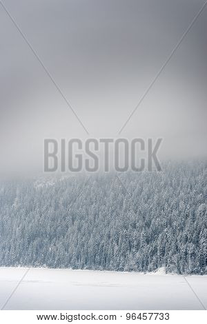 Forest With Snow Bavaria