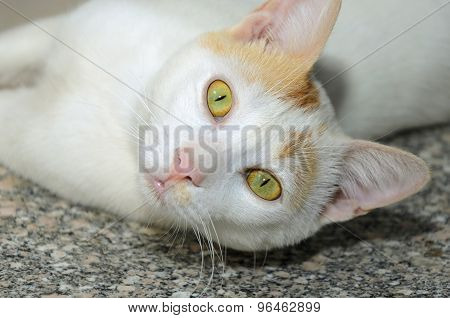 Egyptian Homeless Cat Lays On Marble Porch
