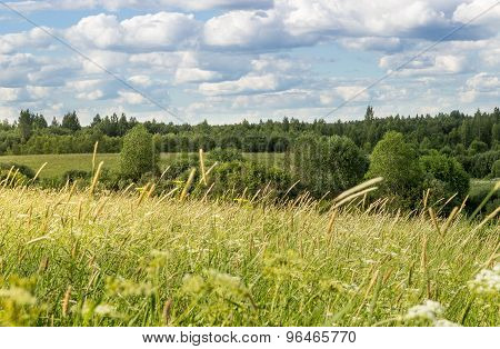 Summer landscape with meadow