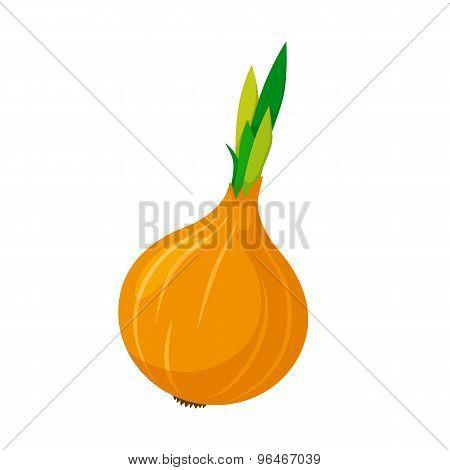 Onion vegetable.
