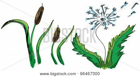 Drawn colored flower and reed. Vector illustration