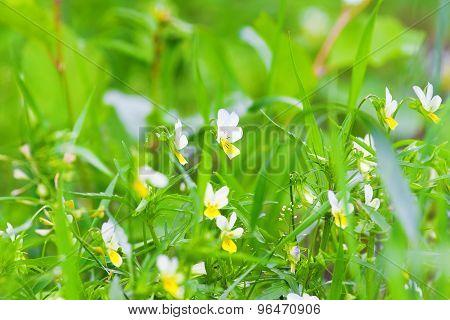 Delicate Wild Flowers