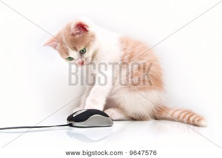 Red Green-eyed Kitten With The Computer Mouse