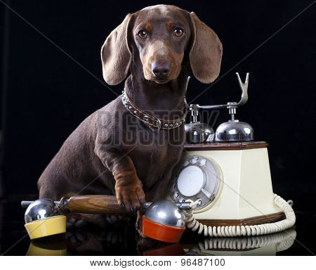 dachshund  dog and retro phone
