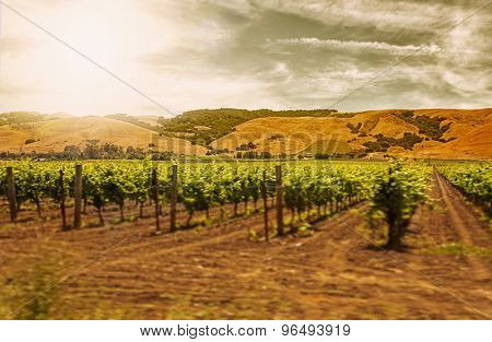 Motion blur moving past Californian vineyard and rows of vines with filters