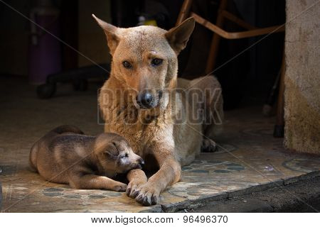 Mather And Baby Dog
