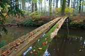 stock photo of primitive  - primitive bridge made out of some planking - JPG