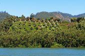stock photo of dam  - View of Madupetty Dam in Munnar - JPG