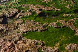 picture of green algae  - Seashore with yellow rocks and emerald green algae in water between them - JPG