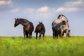stock photo of colt  - Herd of mare and colt in spring pasture grazing - JPG