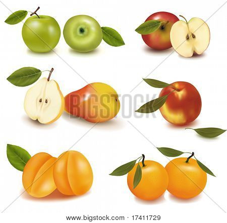 Apricots, pears, apples and tangerine. Photo-realistic vector illustration.