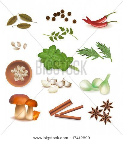 Group of spices. Vector.