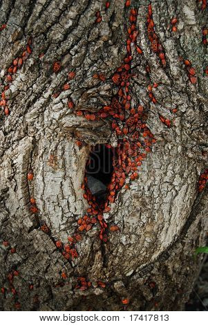 tree's stem