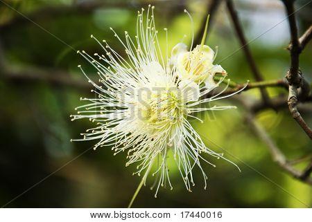Pollen of flowers