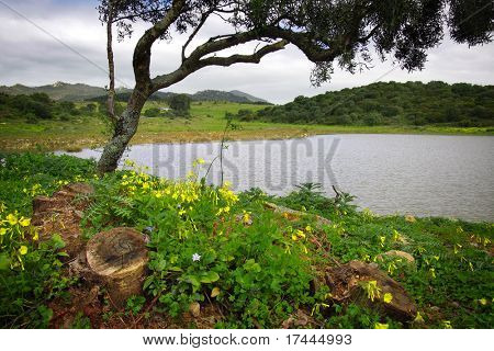 Landscape with a lake a tree and yellow flowers in Sintra, Portugal