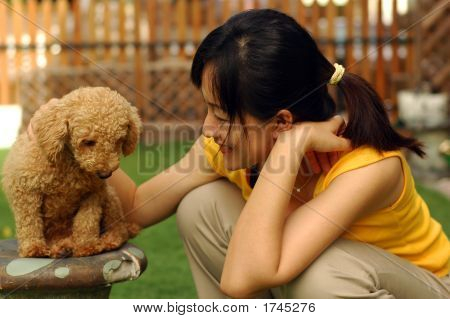 Poodle Feeling Sad