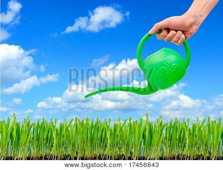 mão do homem águas um gramado gramado, sobre um fundo de céu azul