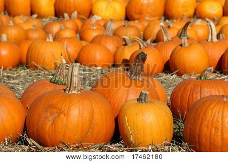 Pumpkin Patch Goodies