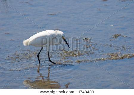 Walking In The Marsh