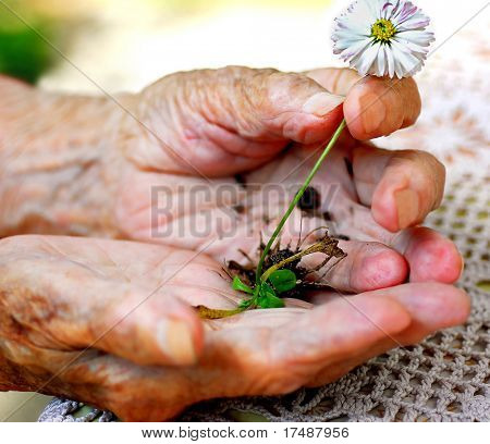 Old woman holding plant