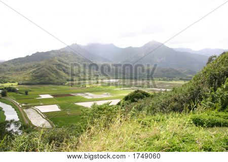Taro Plantation Valley