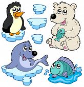 image of polar bears  - Arctic animals collection  - JPG