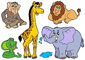 image of zoo animals  - Various African animals  - JPG