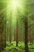 Постер, плакат: Солнечные лучи в лесу